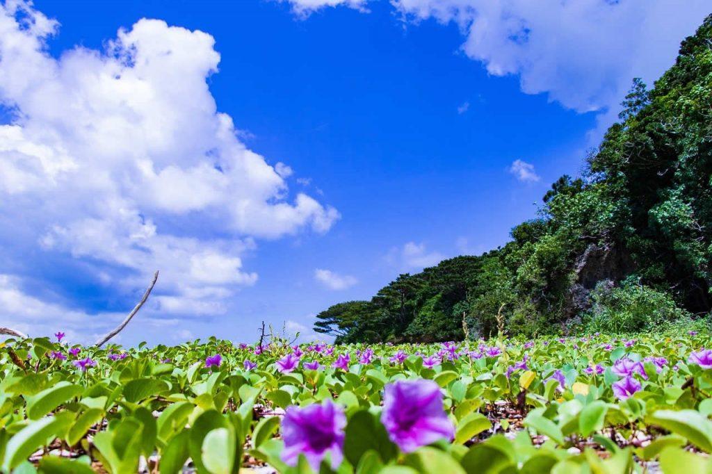 Okinawa Ishigaki Japon
