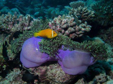 Maldives faune flore sous marine